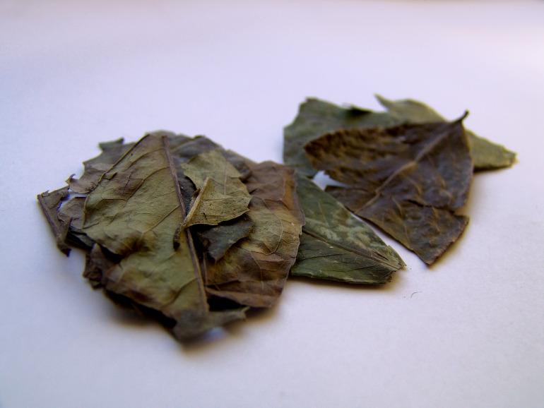 Całe liście Ilex guayusa