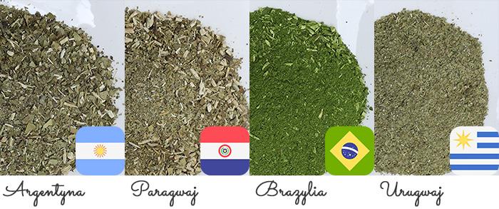 Rodzaje Yerba Mate: z Argentyny, Paragwaju, Brazylii i Urugwaju