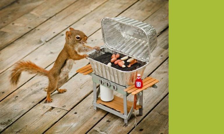 Wiewiórka przy mini grillu