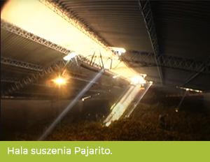 Hala suszenia wfirmie produkującej Pajarito