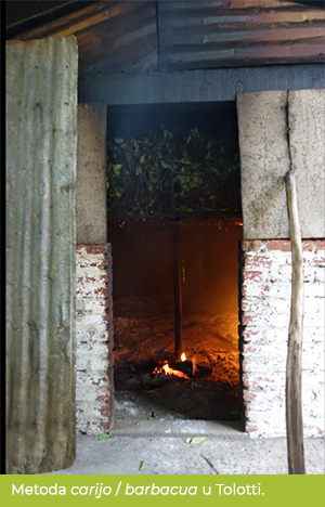 Suszarnia carijo/barbacua u rodziny Tolotti